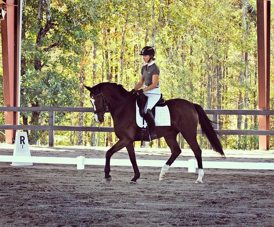 Voilara dressage horse